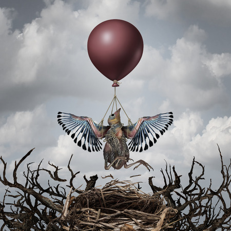 undeveloped: Helping support concept and early assistance metaphor as a baby bird being lifted up to the sky by a balloon as a symbol for providing support and help to the ones in need to achieve a goal and succeed. Stock Photo