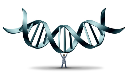 genetic engineering: DNA doctor geneticist holding up a double helix as a medical science symbol for the profession of genetic engineering scientist on a white background. Stock Photo