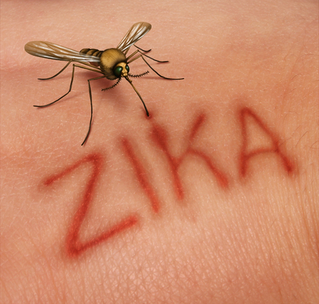 danger: Zika disease concept as a virus risk symbol with a dangerous illness carrying mosquito forming text on human skin that represents the danger of transmitting infection through bug bites resulting in zika fever.