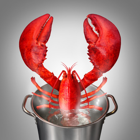 lobster pot: Lobster in a pot as a fresh catch of the day cooked red crustacean sticking out of a cooking kettle with boiling water as a seafood symbol and fine dinning restaurant meal.