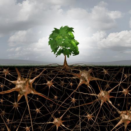Neuron hersenen verbinding concept als een boom in een menselijk hoofd vorm met wortels in de vorm van actieve groeiende neuronen met verbindingen naar het zenuwstelsel anatomie. Stockfoto
