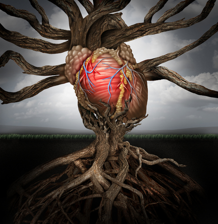 infarction: Human heart health concept as a symbol for growing a body organ and the veins and arteries of the circulatory system as a body part shaped as tree roots and branches connected together as a medical metaphor for living life. Stock Photo