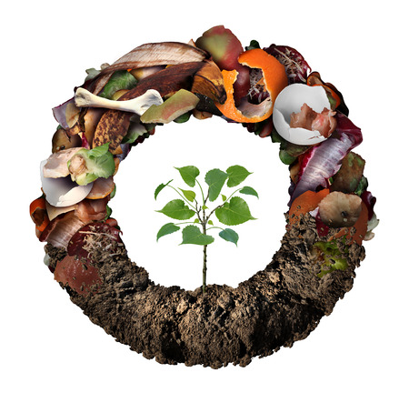 Composte life cycle symbol and a composting stage system concept as a pile of rotting kitchen fruits egg shells bones and vegetable food scraps shaped as circle with soil at the bottom and a sapling growing.