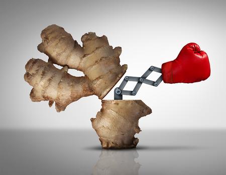 Ginger médecine concept comme une racine médicinale à base de plantes naturelles ouvert avec une icône de gant de boxe émergents avec un mécanisme d'illustration 3D pour combattre la maladie et de la douleur comme une métaphore pour les médicaments traditionnels holistique ou orientale. Banque d'images - 54533157