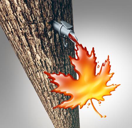 jarabe: Savia de arce que fluye concepto como un dulce gotas de líquido que gotea árbol de jarabe en forma de una hoja de arce como una temporada de primavera norte adición de sacarosa tradicional bajar en un símbolo cabaña de azúcar como una ilustración 3D.