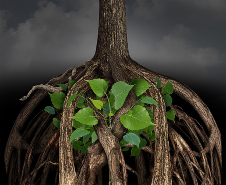 hardship: Difficult business growth concept as a large tree root obstacle trapping a determined smaller green sapling representing the idea of career or life struggle to prosper in a challenging situation. Stock Photo