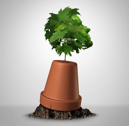 Human vastberadenheid psychologie-concept en de kracht van doorzettingsvermogen als een jonge boom boom in de vorm van een hoofd growig uit een upsidedown bloempot als motivatie symbool voor herstel met 3D illustratie elementen. Stockfoto - 59276553