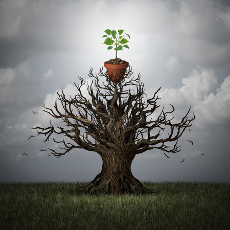 surreal: Support the future concept and foundation and trust symbol as an old tree lifting up a potted young plant as a hope for new business or life metaphor with 3D illustration elements. Stock Photo