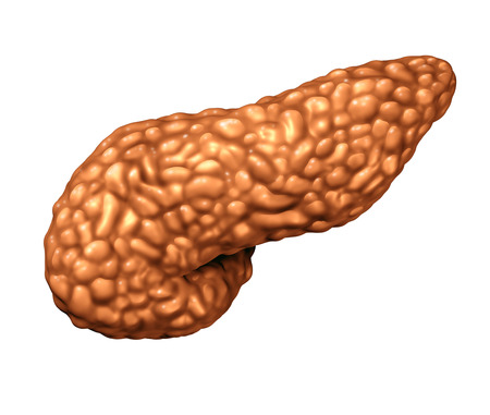 Pancreas human organ as a panceatic digestive gland body part as a medical symbol for endocrine system isolated on a white background as a 3D illustration.