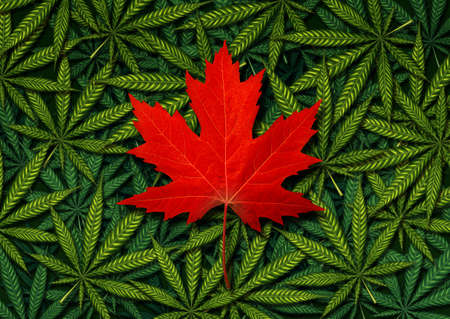 legality: Canadian marijuana concept and Canada canabis law and legislation social issue as medical and recreational weed usage icon as a red maple leaf on a background of green pot symbols in a 3D illustration style.