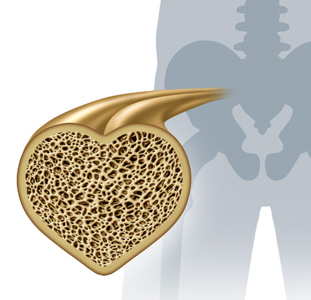 marrow: Bone health and osteoperosis prevention concept as a healthy anatomy in a heart shape as a strong normal spongy tissue from a human skeleton structure as an icon for orthopedic and an orthopedist with 3D illustration elements. Stock Photo