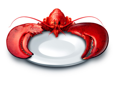 pincers: Lobster plate dinner on a white background as fresh seafood or shellfish food on a blank dish as a luxury expensive meal concept as a complete red shell crustacean holding the dishware with claws.