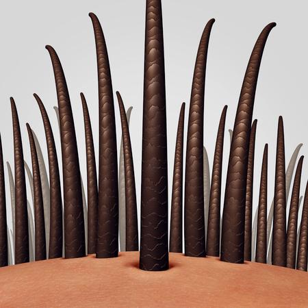 3 D イラストレーションとして dermitology 医療のシンボルとして新たな軸を持つ皮膚頭皮と毛の解剖学をクローズ アップ。