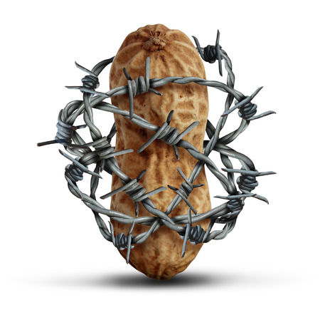 Food allergy prevention and avoiding nuts and other allergic risk ingredients caution as a peanut wrapped in barbed wire as a symbol for protection and health security in a 3D illustration style on a white background.