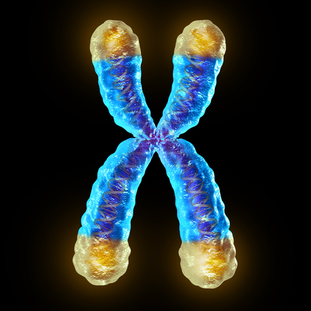 degenerative: Telomere length medical concept and telomeres located on the end caps of a chromosome resulting in aging by damaging DNA or protection resulting in living longer or longevity as a 3D illustration. Stock Photo