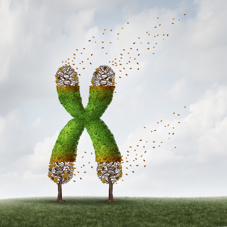 Telomeres length loss with DNA and shortening telomere medical concept as a tree with falling leaves on the end caps of a chromosome as a symbol for aging and living a shorter life due to genetic age damage with 3D illustration elements. Foto de archivo