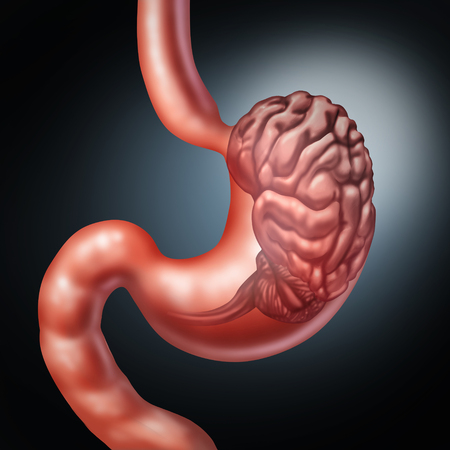 Stomach brain and enteric nervous system symbol or gut feeling concept as a human digestion and thinking organ as an icon for gastrointestinal function or digestion disorder and food craving with 3D illustration elements.