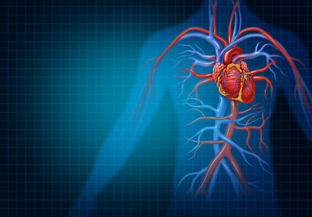 Cardiology and cardiovascular heart concept as a human blood circulation health medical symbol representing a healthy circulatory heart organ with veins and arteries in a 3D illustration style.