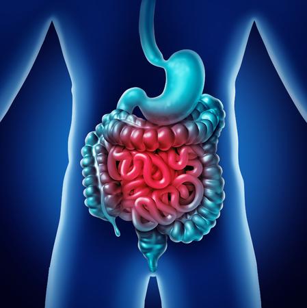 Darm Pijn en gastro-intestinaal spijsverteringsontstekingsprobleem als spijsverteringsongemak of constipatie en infectie als een 3D-illustratie. Stockfoto