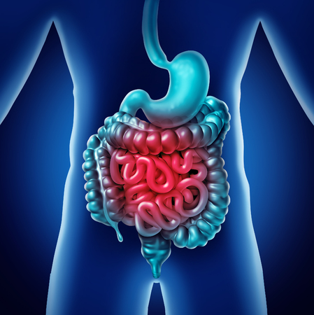 Intestine Pain and gastrointestnal digestion inflammation problem as digestion discomfort or constipation and infection as a3D illustration.
