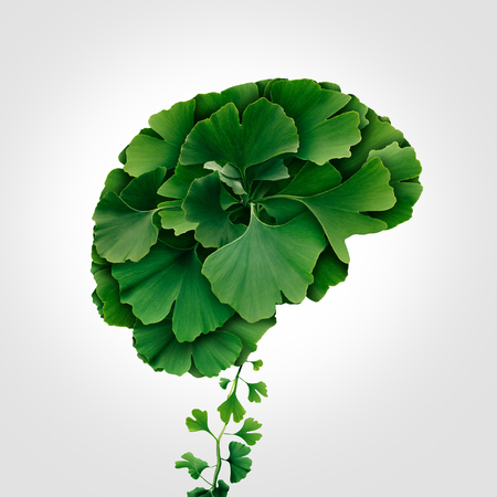 Ginkgo Biloba brain as a herbal medicine concept and natural phytotherapy medication symbol for healing as leaves shaped as a thinking human organ.