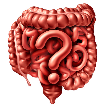 Digestion questions as the human intestine and colon shaped as a gastrointestinal question mark as a symbol for colonoscopy or gastric  inflammation and cancer as a 3D illustration.