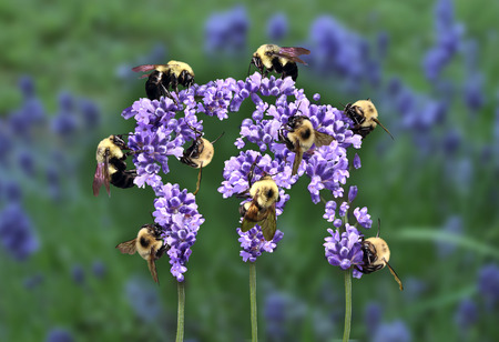 Global teamwork concept and international strategy as a group of working bees harvesting nectar together from a flower shaped as a world globe representing globalization networking and a connected community sharing wealth. Stock Photo