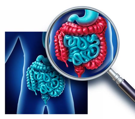 결장 및 대 장 고통과 소장 소화 기관 그림 소화 기관 신체 및 3D 그림으로 의료 증상 및 진단 기호로 항문과 염증 개념.
