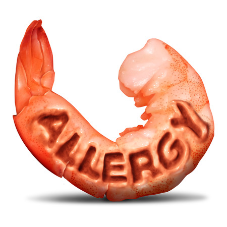 Shrimp and shellfish allergy health concept and allergic to crustacean symbol with text embossed in the food on a white background with 3D illustration elements.