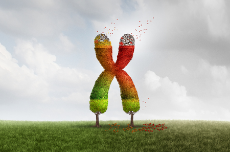Telomere Aging length loss health concept with DNA and shortening telomeres medical idea as a green tree declining with falling red leaves on the end caps of a chromosome with 3D illustration elements.