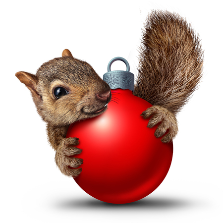 Christmas cute squirrel with a christmas holiday ball ornament as a winter celebration symbol on a white background with 3D render elements.