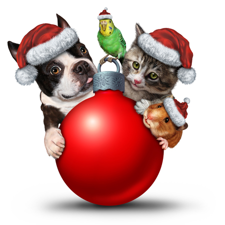 Christmas pets decoration ornament as a cute cat puppy and bird with an adorable hamster wearing a santa hat as a winter seasonal symbol.