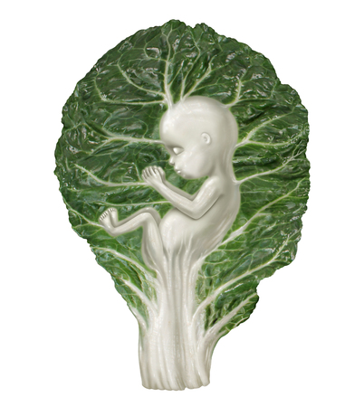 Nutrition In Pregnancy and eating healthy food for a developing baby as a kale vegetable leaf shaped as a human fetus as a eating for your baby metaphor in a 3D illustration style.