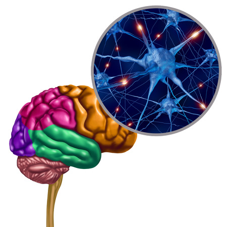 Brain lobe active neurons as a human thinking ogan with neuron magnification with 3D illustration elements. Stock Photo