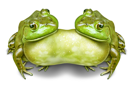 Conjoined twins or siamese twin symbol as two frogs fused and joined together  as a mutation in nature or due to environmental pollution defect in a 3D illustration style.