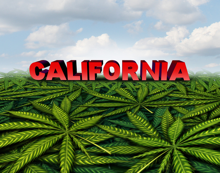 California cannabis and californian marijuana concept as a pot law symbol with weed leaves background as a legalization of recreational drug with 3D illustration elements.