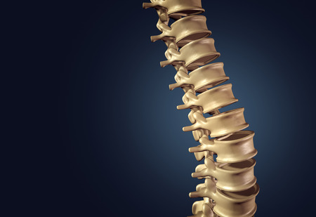 Skeletal human spine and vertebral column or intervertebral discs on a dark background as a medical concept as a 3D illustration. Archivio Fotografico