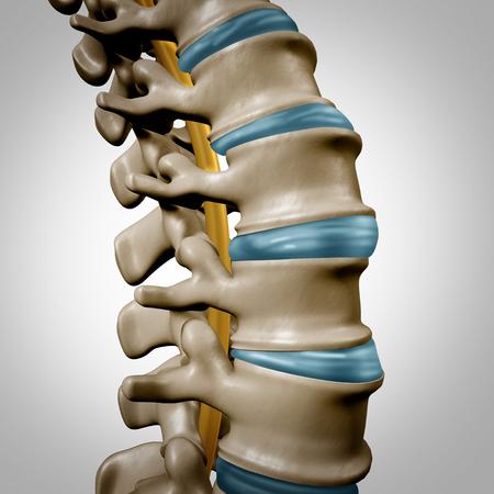 Section d'anatomie de la colonne vertébrale humaine et concept de colonne vertébrale en tant que symbole du corps des soins de santé avec la structure osseuse du squelette et les disques intervertébraux comme une illustration 3D. Banque d'images - 93012300