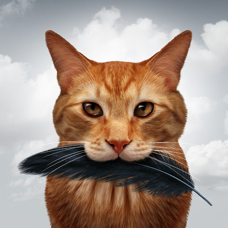 Cat behavior and killer instinct concept as a domestic feline with a black bird feather in its mouth as a metaphor for pet psychology in a 3D illustration style. Stock Photo
