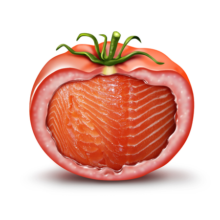 Hybrid food and GMO nutrition concept as a tomato with salmon fish inside as an agriculture genetic breeding and gene manipulation symbol in a 3D illustration style. Stock Photo