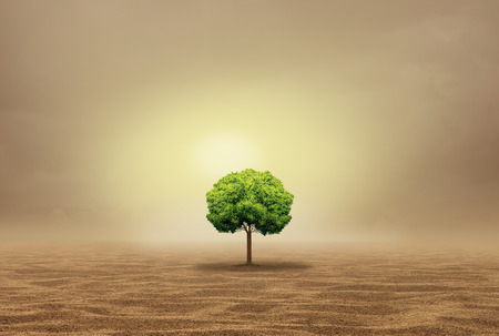 Stranded and helpless as an oasis concept as a vulnerable single tree in a hot arid desert as a withdrawn metaphor in a 3D illustration style. Stock Photo