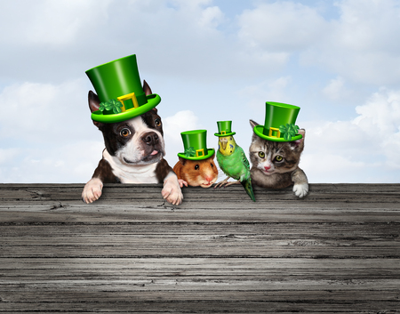 St Patricks or happy saint patrick day pet celebration sign as a March traditional green shamrock decorated pets with 3D illustration elements. Stock Photo