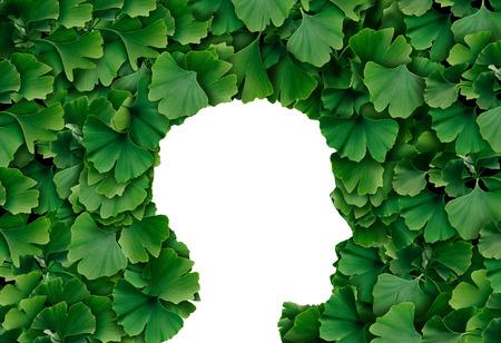 Hoja de Ginkgo Biloba Perfil de la cabeza humana como un concepto de medicina herbaria y símbolo de medicación natural de fitoterapia para la curación. Foto de archivo