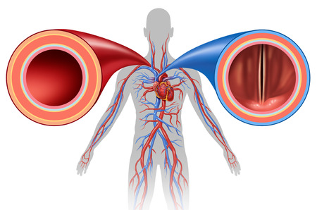 Artery and vein structure as a human circulation concept with blood vessels close up in a 3D illustration style.