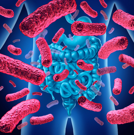 Intestine bacteria and gut flora or intestinal bacterium medical anatomy concept as a 3D illustration.
