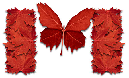 Success in Canada and canadian opportunity concept or snow bird migrate,southward,as red maple leaf symbol shaped as a butterfly flying up as an icon of northern immigration in a 3D illustration style. Stock Photo