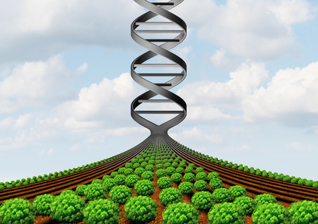 GMO farming and agricultural genetics and genetically modified crops or growing food biotechnology science and farm yield technology with 3D illustration.