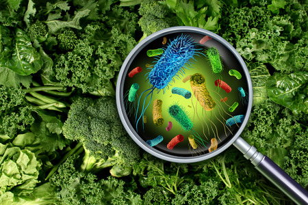 Bacteria and germs on vegetables and the health risk of ingesting contaminated green food including romaine lettuce as a produce safety concept 3D render elements.