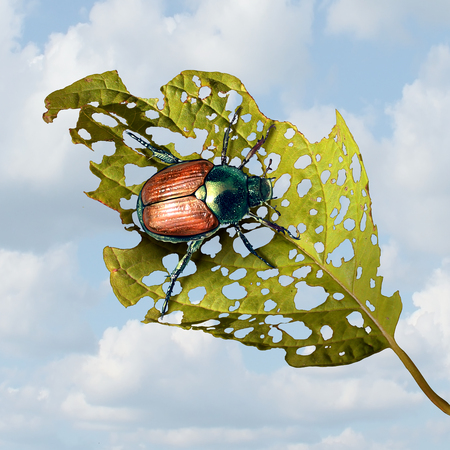 Japanese beetle damage as an infestation of an invasive species insect causing damaged plant and agriculture problems or garden vegetables pests in a 3D illustration style. Stok Fotoğraf