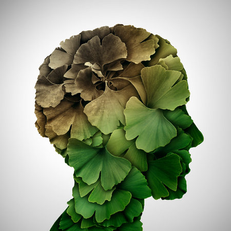 Concept of dementia and memory loss or brain aging due to alzheimer's disease as a medical icon with ginkgo biloba leaves shaped as a human head in a 3D illustration style. Stock Photo